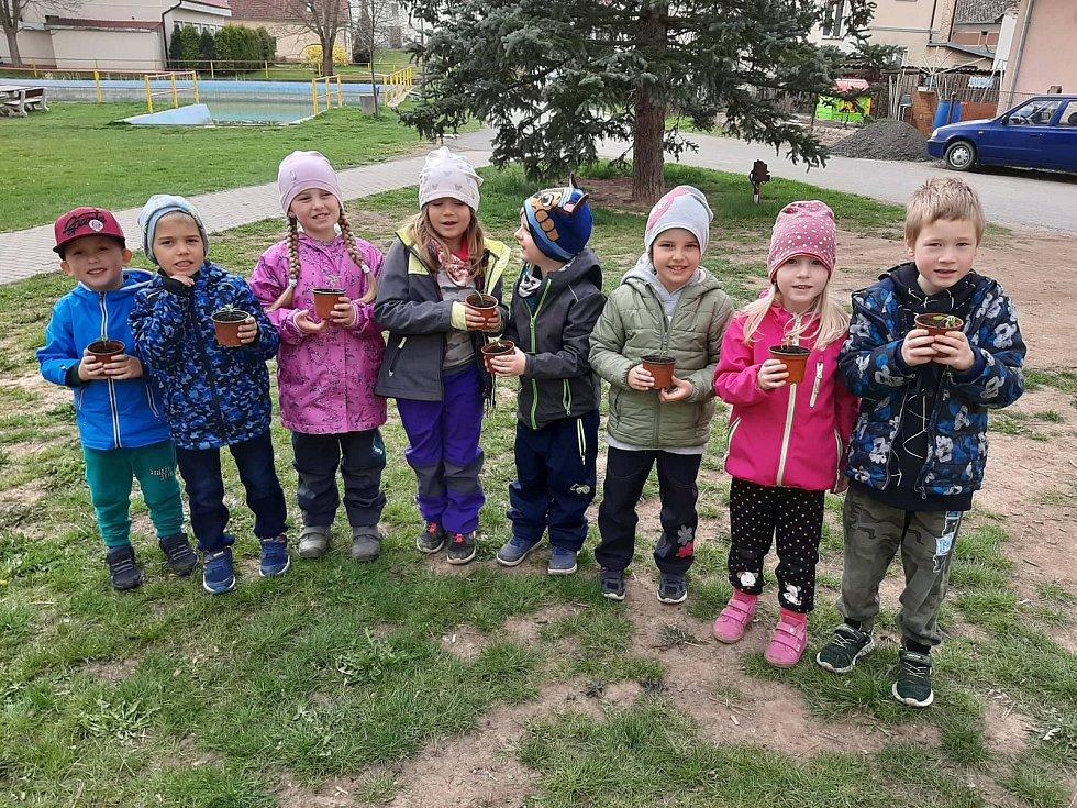 """Děti z šanovské mateřinky zasadily kytičky a pozorovaly, jak se """"klubou"""" z hlíny ven."""
