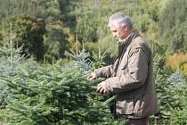 Vánoční stromky na plantáži ve Šlovicích