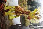 Ve čtvrtek 25. ledna se otevřely dveře rakovnické zoologické zahrady.Zvířátka z rakovnické zoologické zahrady jsou k vidění ve zdejší roubence zvané Lechnýřovna. Výstava potrvá až do 28. března.
