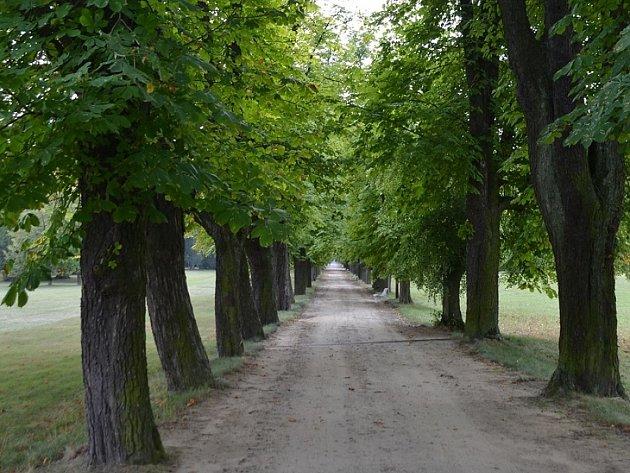 Jírovcová alej u zámku Lány.