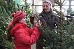 Prodej vánočních stromků v Senomatech