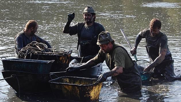 Rybařina, to je dřina. Náročná práce v bahně při sběru ryb.