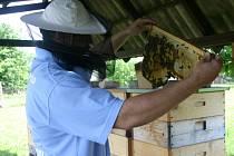 Včelař Michal Borůvka
