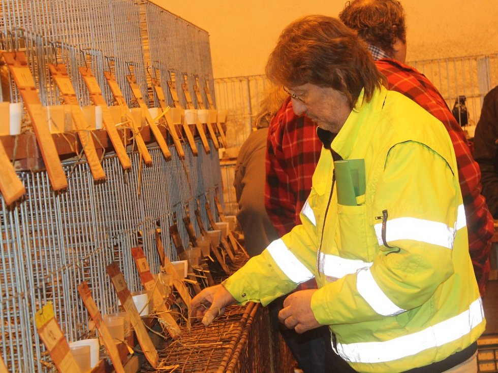 Zimní výstava chovatelů v Rakovníku