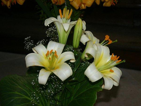Výstava lilií vRabasově galeri