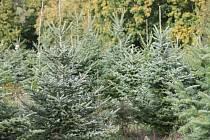 Vánoční stromky.