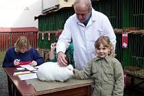 Posvícenská výstava drobného zvířectva 2010