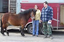 Svod koní - Bulovna - Rakovník
