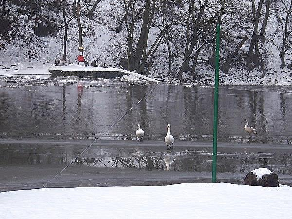 Obleva na Berounce leden 2011