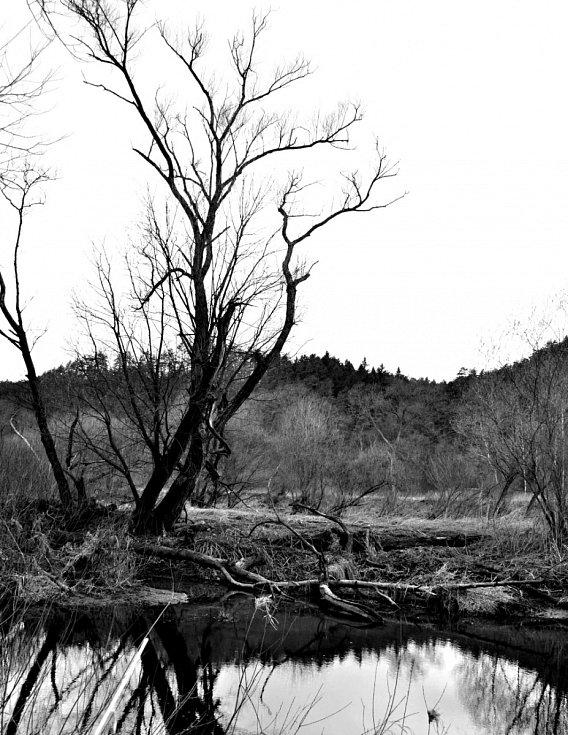 Skryjská jezírka, okolí Berounky