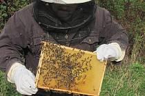 Včelí farma ze Třtice dostala zlatou medaili za med