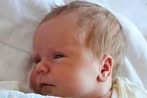 PROKOP NEUGEBAUER, HŘEDLE. Narodil se 17. září 2020. Rodiče jsou Hana a Tomáš, sourozenci Matěj, Kryštof a Vítek. Po porodu vážil 4,2 kg a měřil 54 cm.