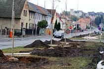 Staré stromy byly v ulici Malinovského již zcela nahrazeny novými. V úterý 20. října bude za účasti starosty města a ředitelky Rakony slavnostně dosazen poslední strom.