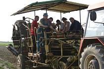 Vybírání brambor v Šípech