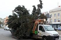 Vánoční strom byl na Husovo náměstí v Rakovníku přivezen 25. listopadu z nábřeží Dr. Beneše.