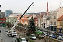 V loňském roce zdobil Husovo náměstí v Rakovníku smrk stříbrný. Městu ho daroval jeden z občanů Rakovníka.