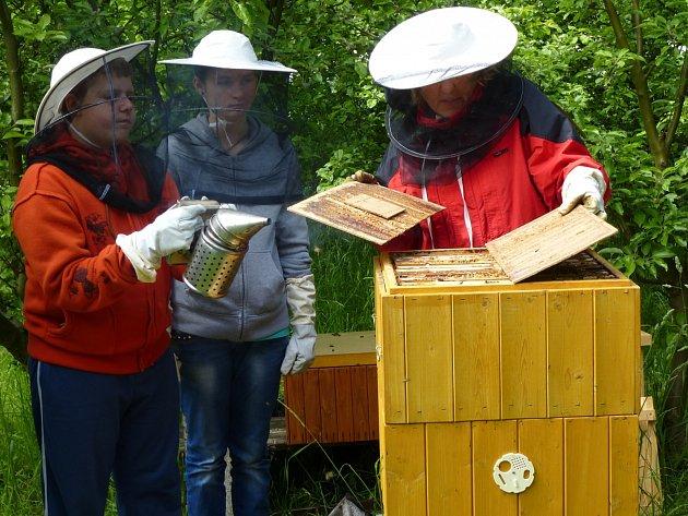 Práce ve včelařském kroužku na 3. ZŠ v Rakovníku