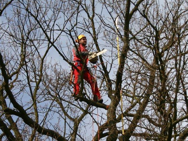 Ošetření památného dubu v Novém Strašecí