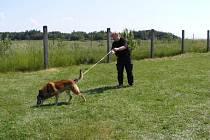 Služební pes na stopě