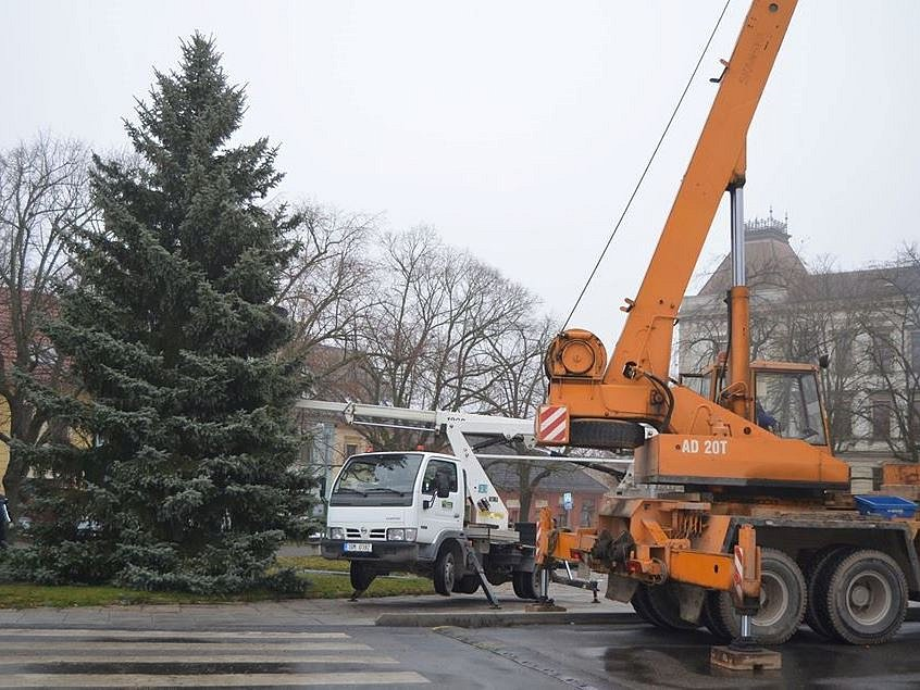Z umísťování vánočního stromu v Novém Strašecí 25. listopadu 2019.