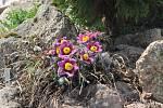 Květiny ilustrační foto