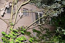 Bývalá ubytovna lehla popelem