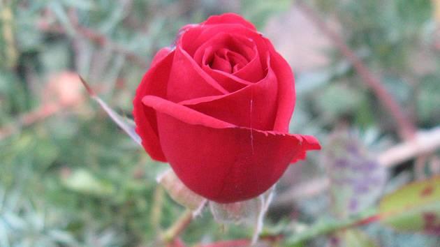 Básně jsou o lásce i běžných věcech lidského života