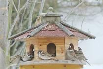 Ptáci na krmítku ilustrační foto