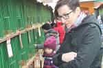 Výstava drobného zvířectva v Rakovníku