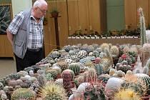 45. výstava kaktusů a jiných sukulentů v Gymnáziu Zikmunda Wintra v Rakovníku.