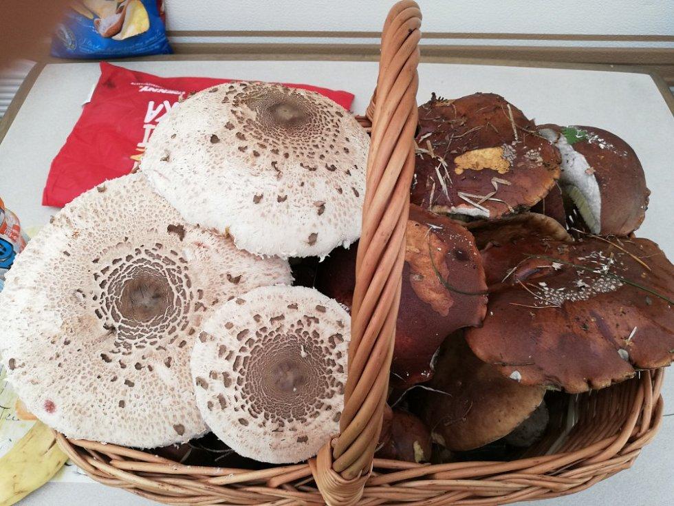 """Houbařský úlovek z Kempu veselý Habr. """"Každý den jsme s přítelem našli tři košíky hub, v lese jsme strávili ani ne dvě hodiny,"""" pochlubila se čtenářka."""
