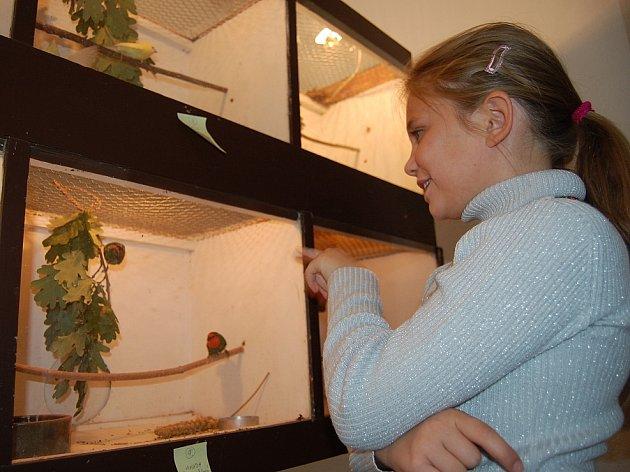 Výstava exotického ptactva ve Mšeci.