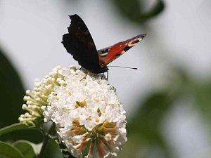 Svátek motýlů