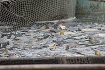 Ryby. Ilustrační foto.