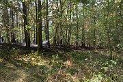 Čtyři hasičské jednotky uhasily les během jedné hodiny.