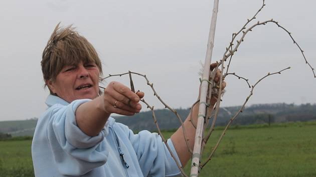 Sázení stromů v Kolešově