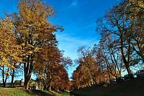 Památné stromy podél Rakovnického potoka.