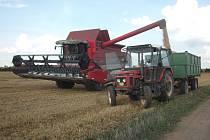 Sklizeň ozimé pšenice na poli u Kněževsi