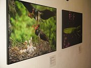 Debata o chystaném vyhlášení Národního parku Křivoklátsko