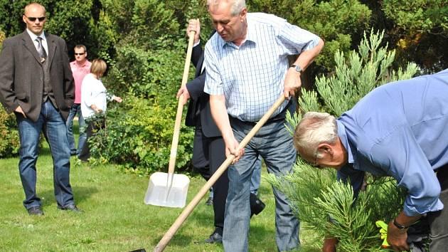 Prezident Miloš Zeman zasadil v lánském parku v roce 2013 strom