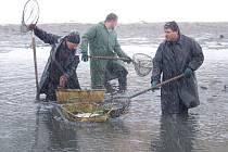 Jeseničtí rybáři při výlovu rybníka Zbořený mlýn II