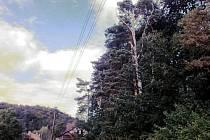 Stromy kořenící hned u příkopu.