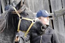 Dražba koní v Rousínově