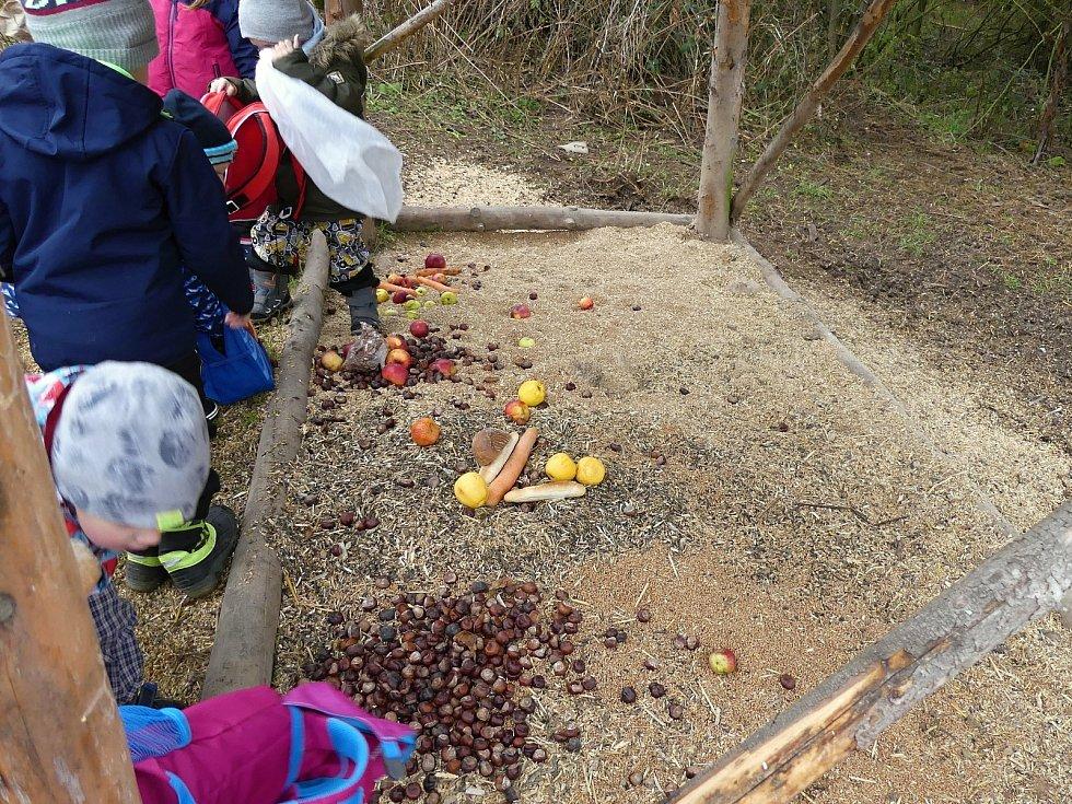 Krmení lesních zvířat je v šanovské školce již tradicí.