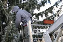 Kácení vánočního stromu v Rakovníku
