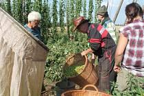 Ruční česání chmele na farmě U Kutílků