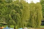 Tyršovo koupaliště v neděli 2. června