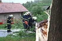 Padlý strom v Modřejovicích na Rakovnicku