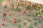 Takto vypadaly květinové záhony v parku Na Sekyře po zásahu vandalů.