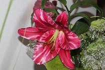 Výstava lilií